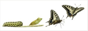 van_rups_tot_vlinder